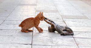 cat social play