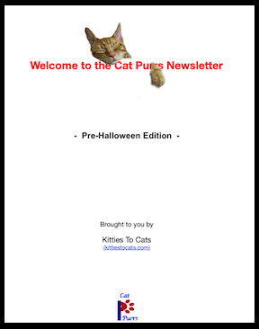 cat purrs newsletter